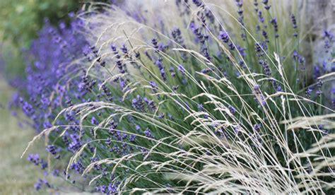 Lavendel Und Gräser by Prugger Landschaftsarchitekten