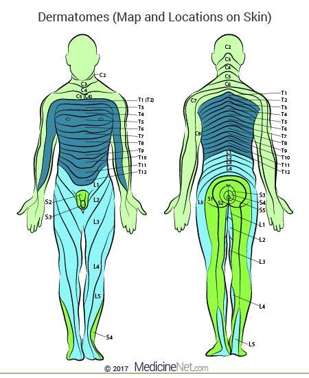 dermatomes chart  locations   skin