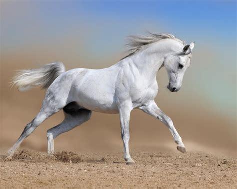 hermosas imagenes de caballos salvajes fotos de animales