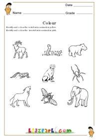 animals  insects identifying worksheetpreschool