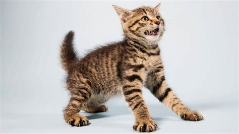 cat why scared cats cucumbers cucumber scare animals afraid terrified go kitty scaredy frightened jump animal startled angry baby cute