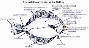 Kosher Fish Singapore  Fins And Scales Fish  U2013 Tahor  U2013 Clean