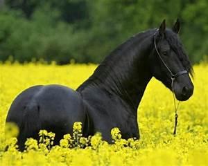 Bilder Von Pferden : mehr als 70 super sch ne pferde bilder ~ Frokenaadalensverden.com Haus und Dekorationen