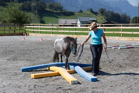 pferde training pferde ausbilden