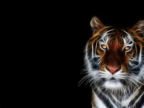 Digital Tiger Wallpaper by Digital Tiger Hd Desktop Wallpaper Widescreen High