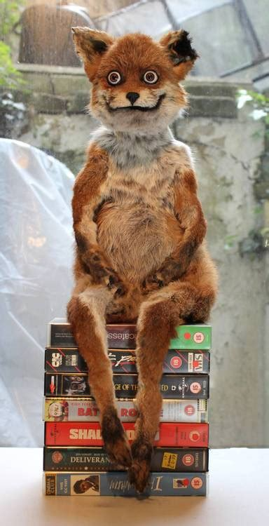 Taxidermy Fox Meme - crappy taxidermy interview with adele morse creator of stoner fox