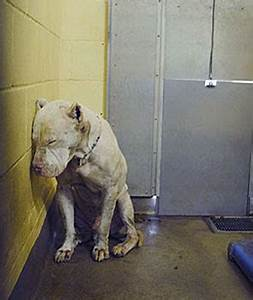 Update: Nico, the deaf shelter dog whose photo inspired ...