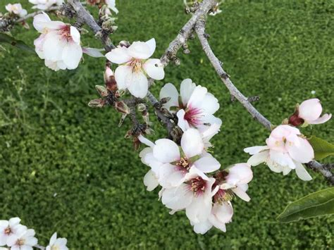 Free picture: white flower branch spring flora nature