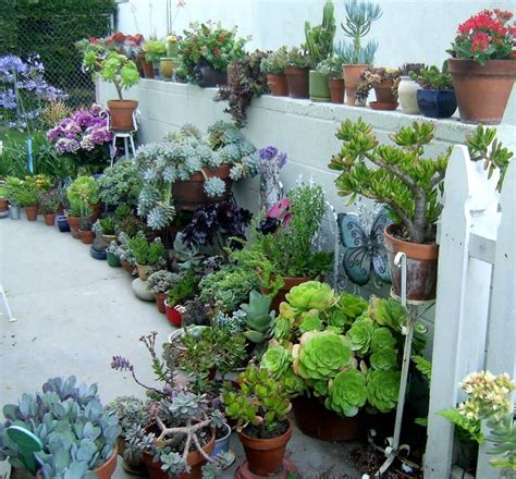 Would Love This Succulent Container Garden Make Look