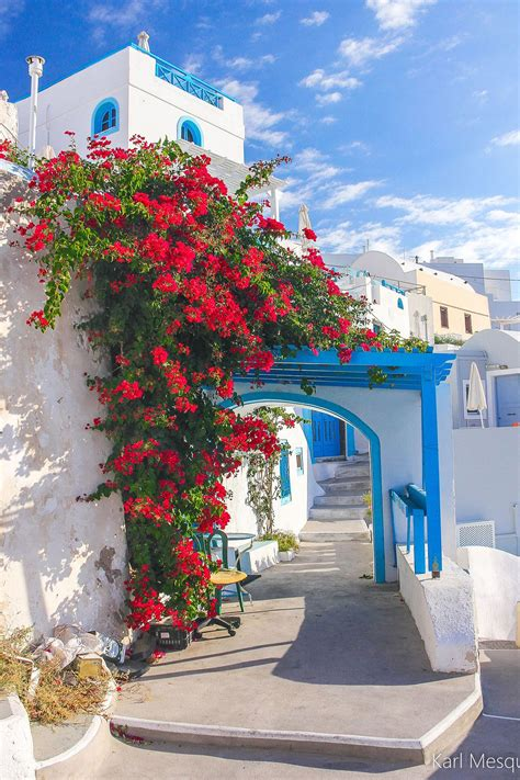 Bougainvillea In Santorini Greece Santorini Greece