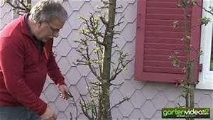 Apfelbaum Schneiden Sommer : play spalierobst pflanzen ~ Lizthompson.info Haus und Dekorationen