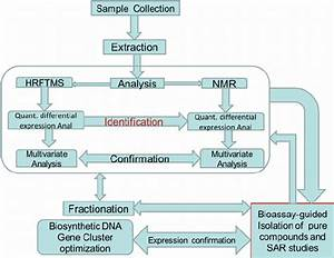 Flowchart Of Activities Integrating Metabolomics To Other