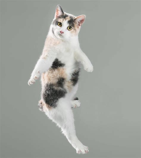 Search For Katz flying cats so segeln diese katzen durch die luft