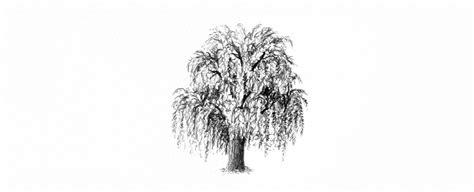 draw trees