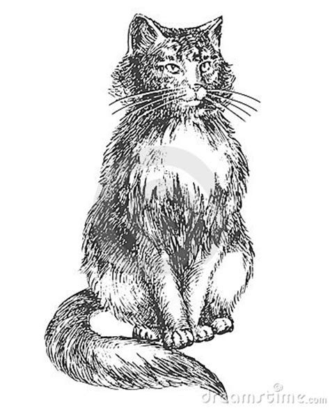 sitting cat drawing royalty  stock images image