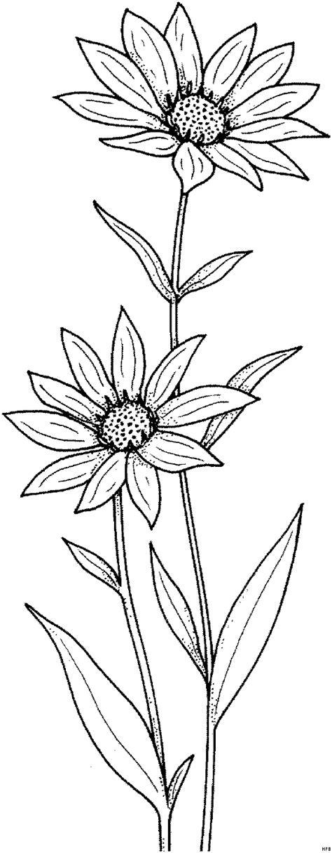 sonnenblumen ausmalbild malvorlage blumen