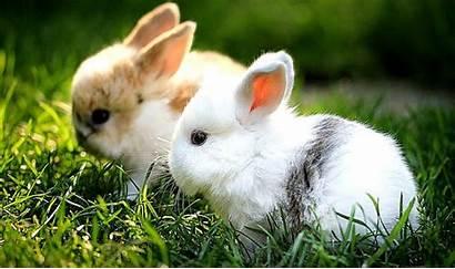 Rabbit Rabbits Wallpapers 2136 Bunny Bunnies Animals