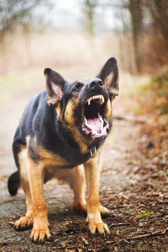 virginia law  police protocol  handling dog
