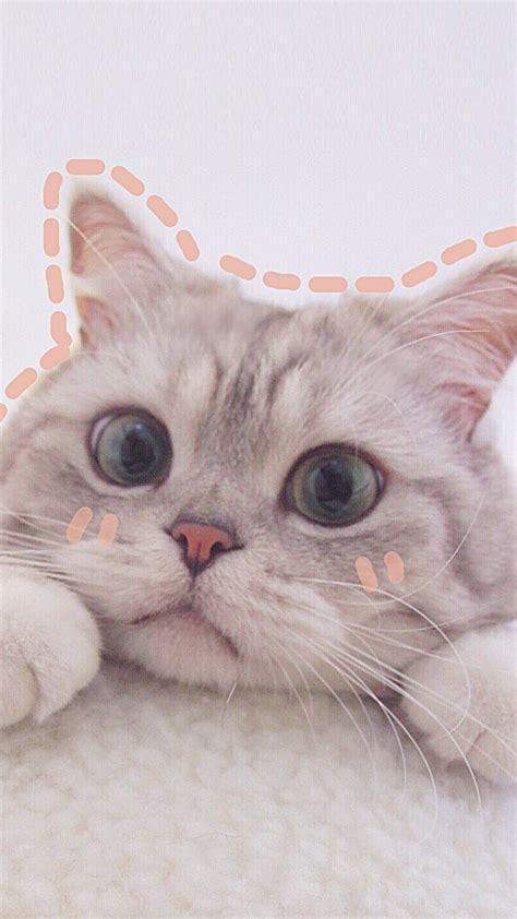 cat aesthetics wallpapers
