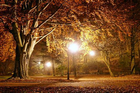 autumn lights park night fall wallpapers