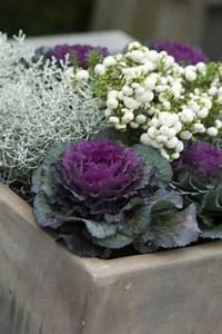 Winterpflanzen Für Balkonkästen : die besten 25 zierkohl ideen auf pinterest chrysanthemen pflanzen chrysanthemen und heidekraut ~ Indierocktalk.com Haus und Dekorationen