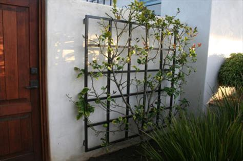 Stand Alone Garden Trellis by Garden Metal Work Trellis Gallery