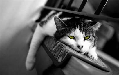 Desktop Cat Widescreen Pixelstalk