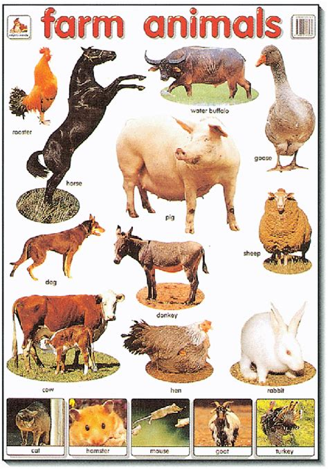 poster farm animals mighty minds