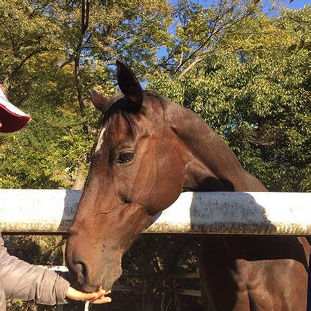 humans horses horse caretaker kobe equestrian credit university club figure trouble ask they help