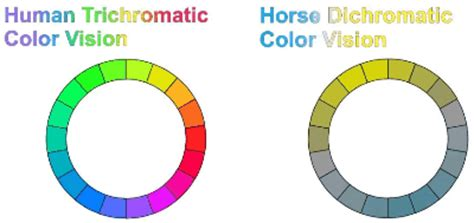 are horses color blind vision in horses more than meets the eye features