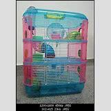 Robo Dwarf Hamster Cages | 293 x 415 jpeg 43kB