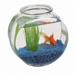 Harley in a Fish Bowl - A-list Interviews