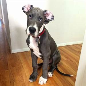 22 Dogs Who Fully Embrace Their Naturally Floppy Ears And ...