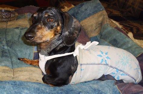 paralyzed dog detailed drag bag instructions