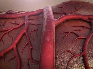 Angiogenesis  Role In Cancer Growth And Spread