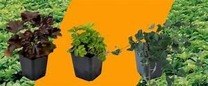 Bodendecker Gelb Blühend : bodendecker pflanzen f r jeden garten zu kaufen bei intragarten seit ~ Frokenaadalensverden.com Haus und Dekorationen