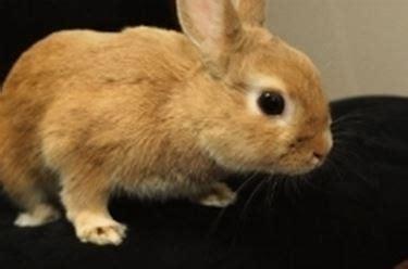 Gabbia Coniglio Nano Prezzo - coniglio nano conigli nani caratteristiche