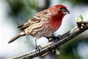 Eastern Washington State Birds
