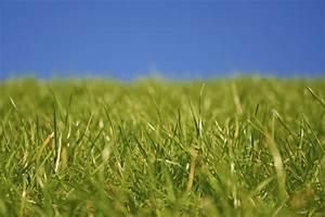 Wann Wächst Rasen : rasen kalken das m ssen sie wissen ~ Markanthonyermac.com Haus und Dekorationen