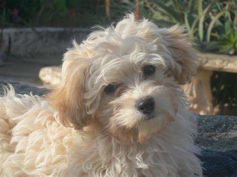 protectora de marin adoptada eder preciosa cachorrita