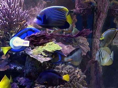 aquarium eau de mer autonome