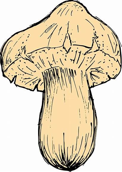 Mushroom Drawing Transparent Vector Svg Eps Onlygfx