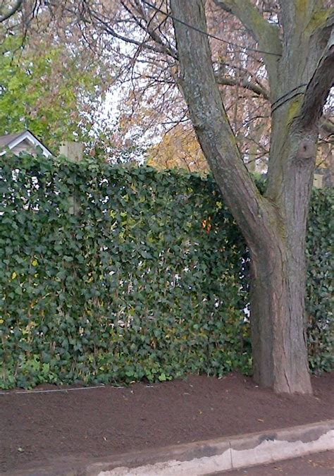 mori green living fence nstantly  cost effectively adds privacy security  greenery