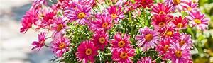 Wie Pflege Ich Hortensien : wie pflanze und pflege ich balkonpflanzen g rtnerei ~ A.2002-acura-tl-radio.info Haus und Dekorationen