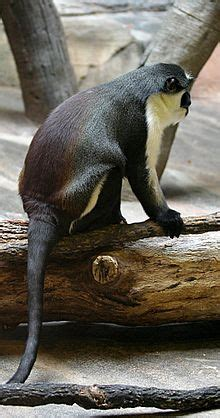 List of mammals of Liberia Wikipedia