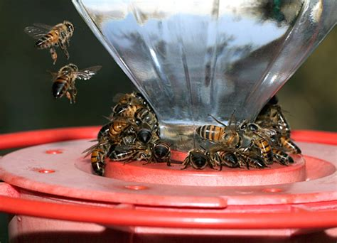 bee guards for hummingbird feeders africanized honeybees the firefly forest