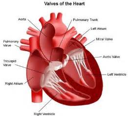 What are Rheumatic Heart Diseases Heart Diseases