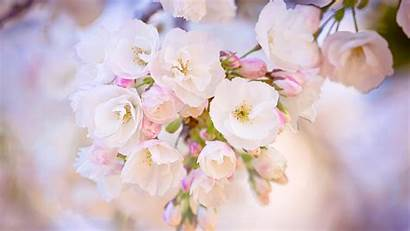 Spring Wallpapers Iphone Desktop Android Ipad Resolution