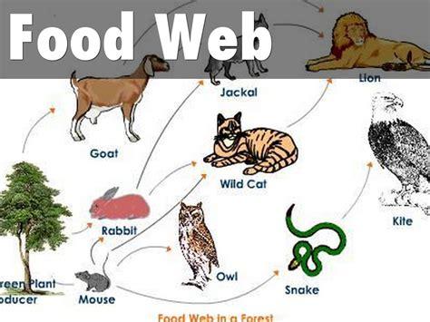 web cuisine coniferous forest food web recipes food
