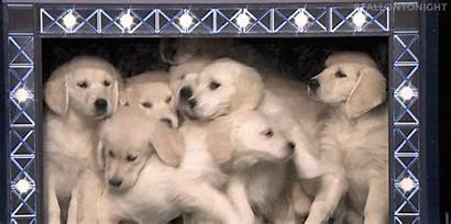 Puppies Giphy Gifs